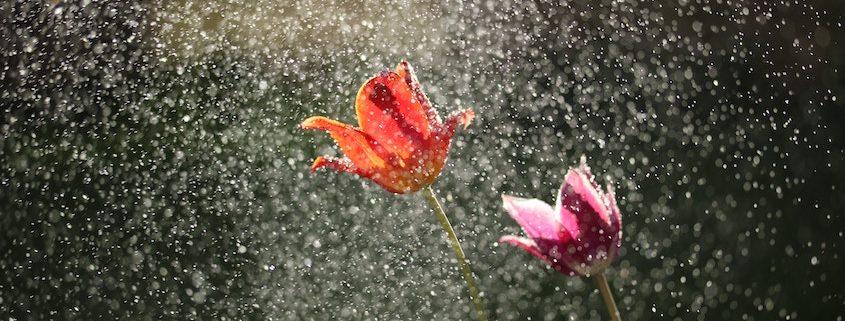 Ubimet Wetter - Nasse Wetterphase: Große Regenmengen im Bergland, deutlich kühler