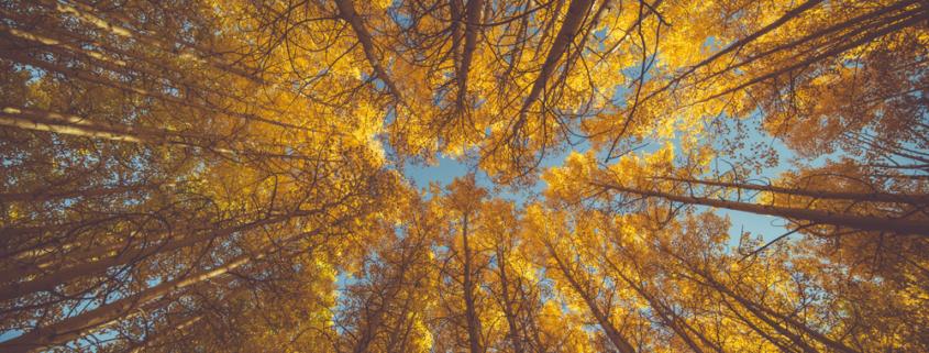 Ubimet Wetter Herbst