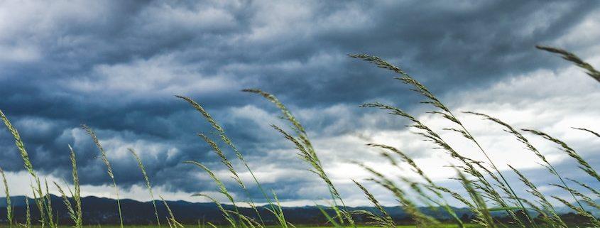 Ubimet Wetter- Wind - Sturm