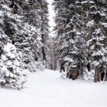 Ubimet - Wetter - Schneefallgrenze bei rund 600 m, mehr als ein halber Meter Neuschnee