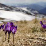 Der Frühling kommt - Sommerliche Temperaturen im März