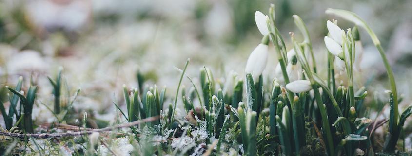 Frühling naht mit großen Schritten