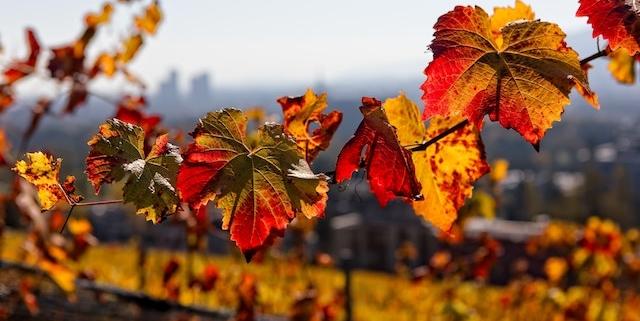Am Wochenende sonniges Herbstwetter mit bis zu 23 Grad