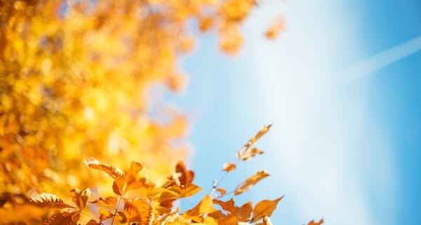Föhn bringt den goldenen Oktober