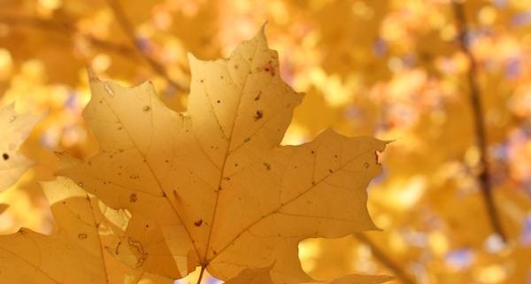 Goldener Oktober ohne Ende