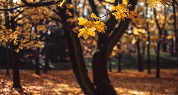 Oktoberrückblick_Ungewöhnlich sonnig mit nassem Ende