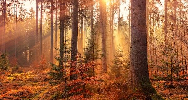 Sonnenschein-Soll-für-Oktober-bereits-erreicht