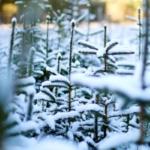 Die Wahrscheinlichkeit für weiße Weihnachten