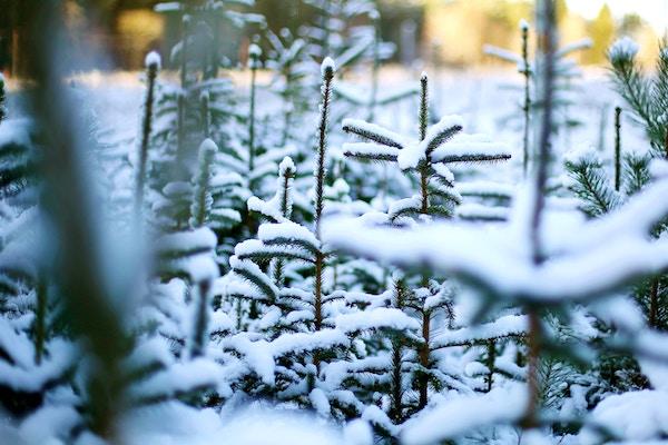 Weiße Weihnachten.Die Wahrscheinlichkeit Für Weiße Weihnachten Ubimet
