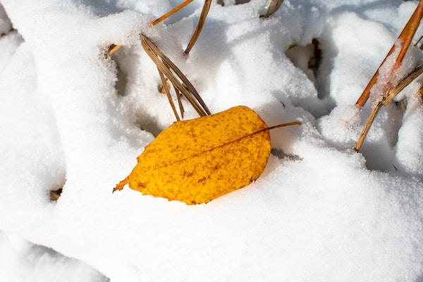 Erster Gruß vom Winter