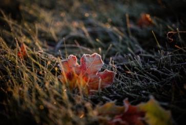 Föhnende und Morgenfrost im Flachland, aber weiterhin trocken