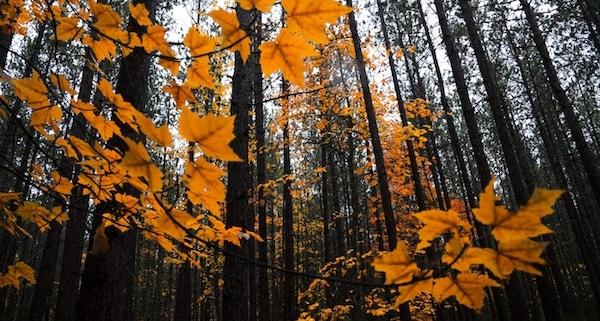 Novemberrückblick_föhnig und warm mit kaltem Ende im Osten