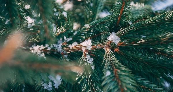 Weihnachtswetter_Trend Richtung grünes Fest