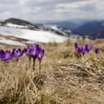 Der Vorfrühling grüßt am Wochenende